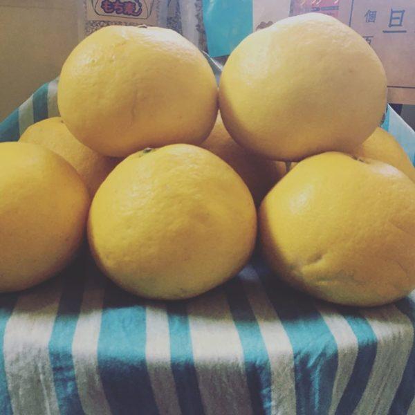 季節の果物、文旦の販売を開始しました